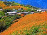 六十石山赤柯山花季燦爛搭上理想一日遊賞花海專車盡興玩花蓮